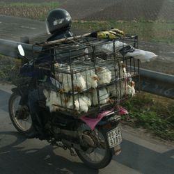 Transport 10