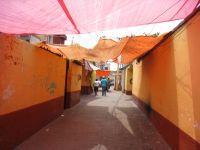Xochimilco 5