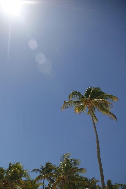 Punta Cana 13