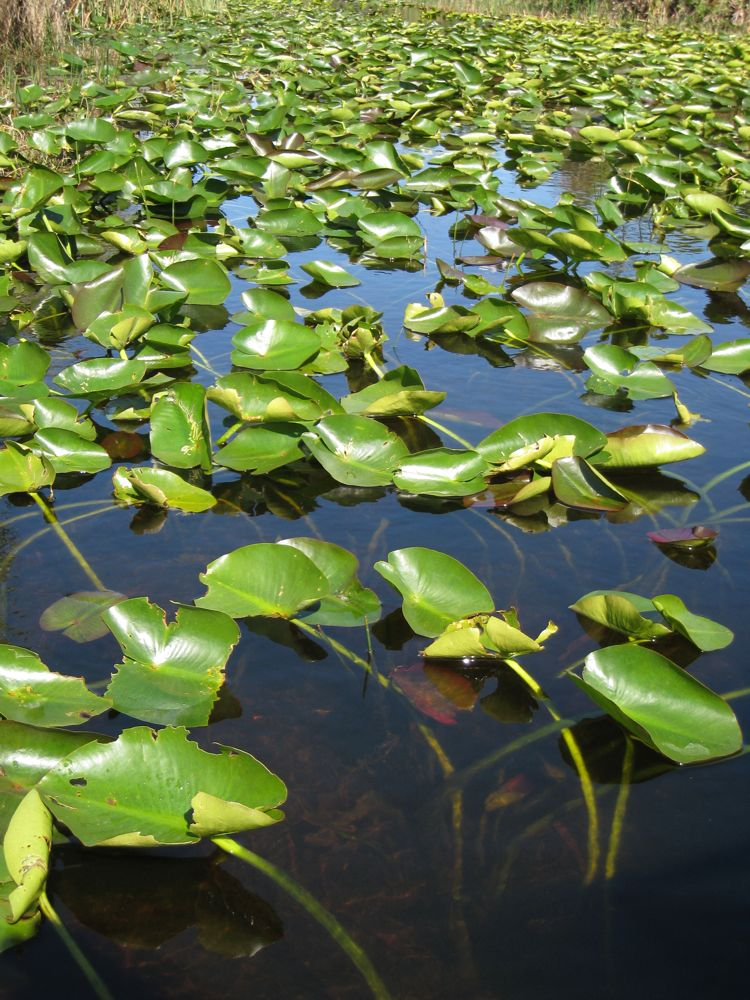 Everglades 9