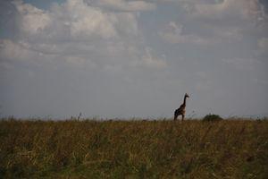 Nairobi 6
