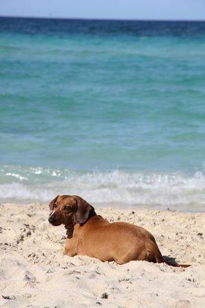 Playa del este 5