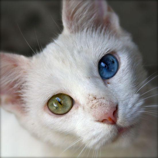DAvid bowie Cat