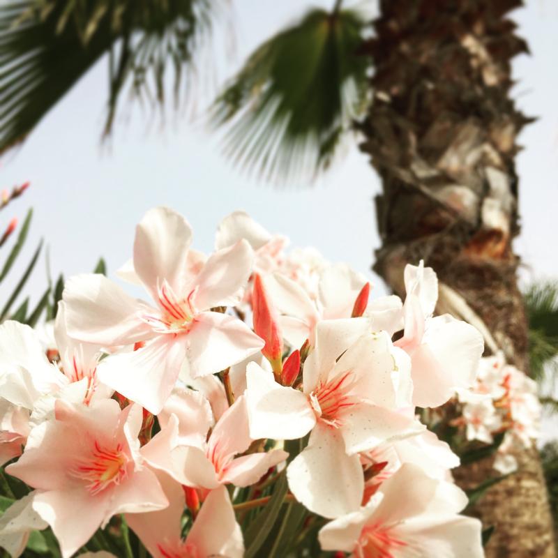Agadir 10