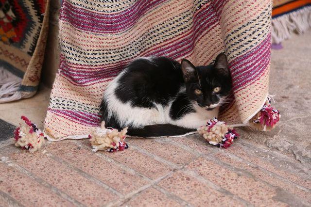 Les chats d'Essaouira
