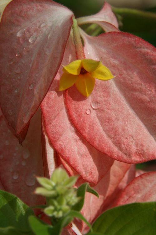 Fleur et rosé