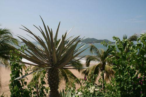 Cocotiers et île de Ixtapa