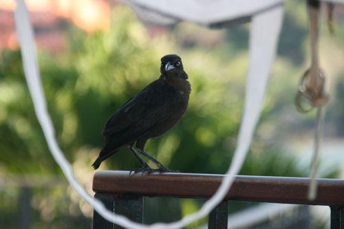 Oiseau au petit-déjeuner